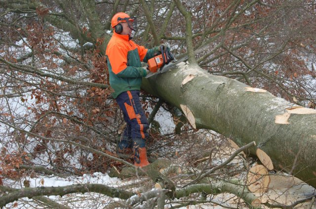 felling-the-tree-is-only-th